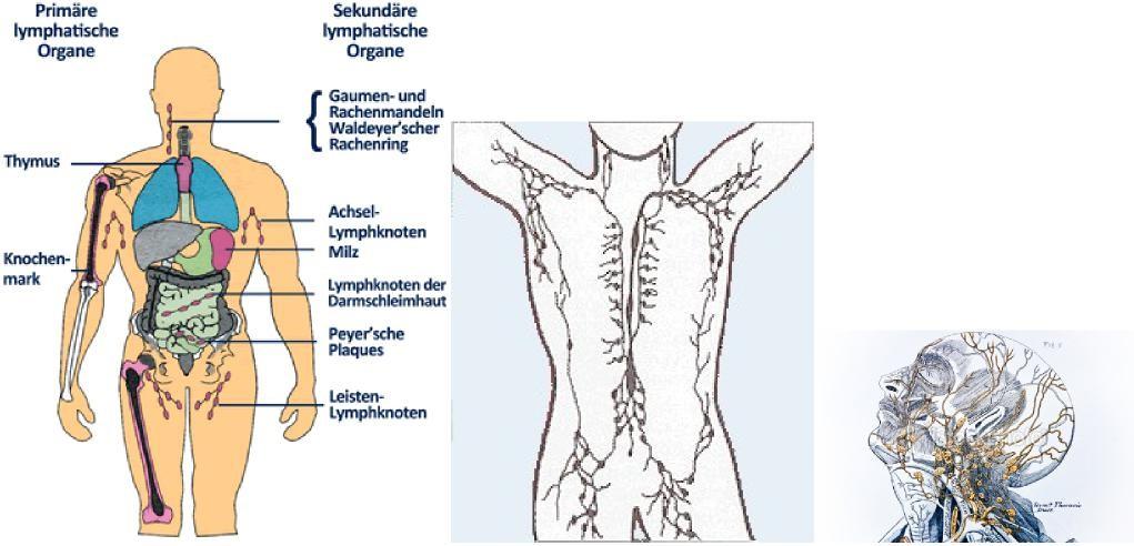 Thymusdrüsenkrebs